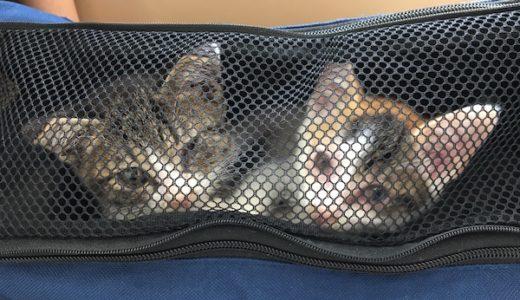 保護した子猫達の通院歴。最初の1ヶ月。