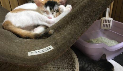 2匹の子猫と一緒に暮らし始めて1ヶ月が経ちました!