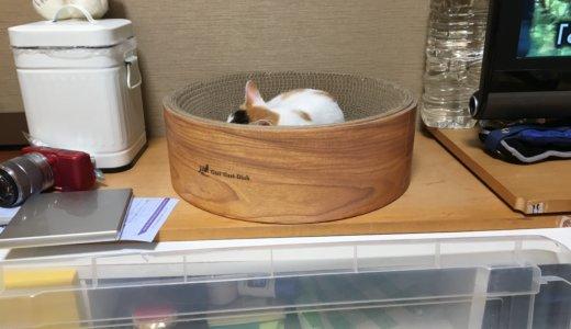 【猫DIY】テレビ台裏への侵入をダイソーグッズで防ぎました!