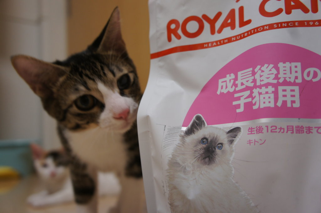 ロイヤルカナン ロイカナ キトン あめ つゆ 猫
