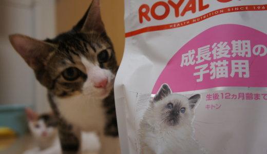 Kitten(キトン)の意味。今更ですが、私は知りませんでした・・・
