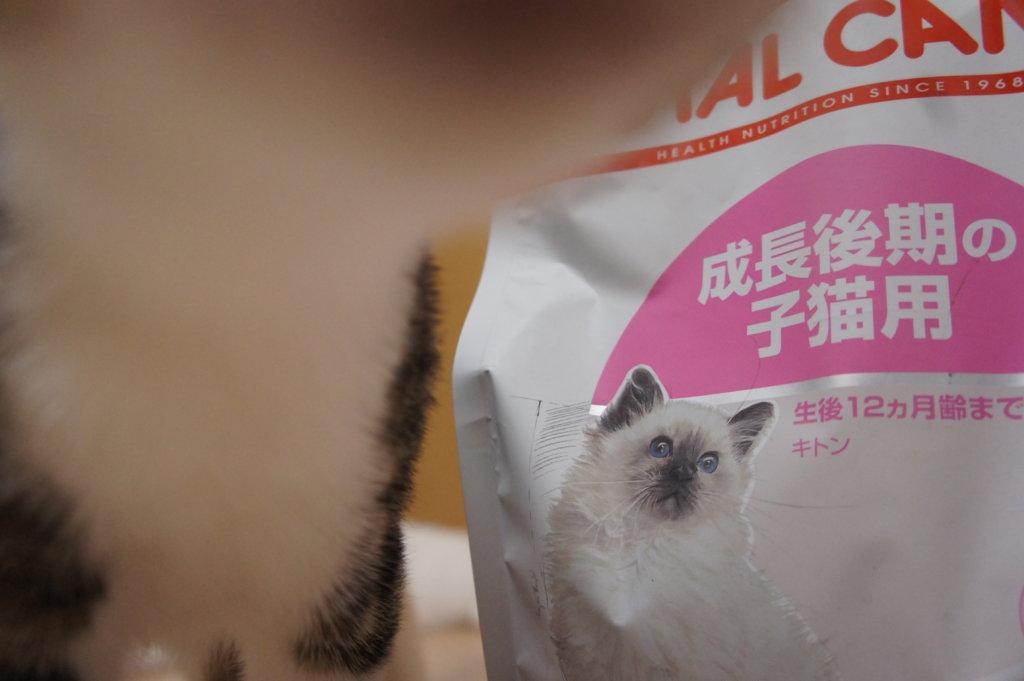 ロイヤルカナン ロイカナ 猫 あめ つゆ