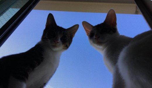 Twitterで投稿した「あめ&つゆ」の猫動画ツイートまとめ(〜2018/08/28)