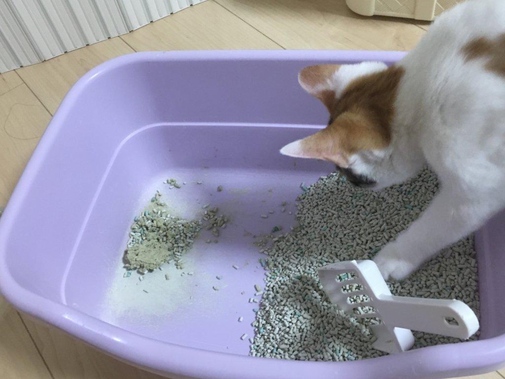 猫 砂トイレ あめ