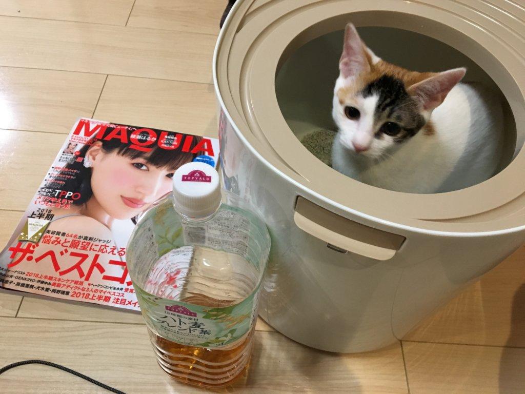 上から猫トイレ プチ あめ