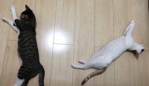 毎月22日が記念日!?二匹の保護猫と暮らし始めて二ヶ月になります!