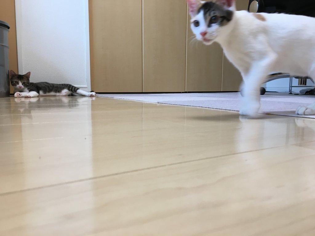 あめ 走る 猫