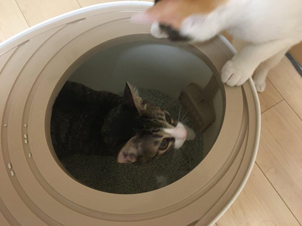 上から猫トイレ プチ