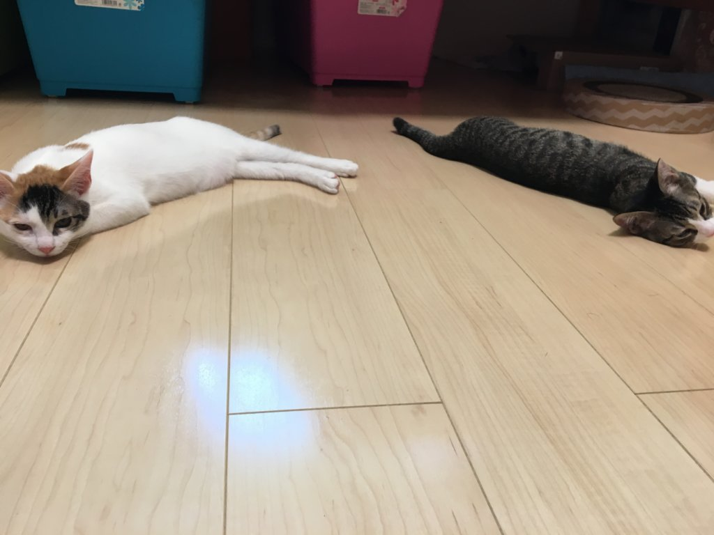 あめつゆ 寝てる 猫