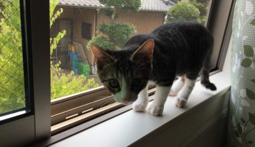 【家猫】新しく部屋を開放した時にはサッシの掃除も忘れずに!