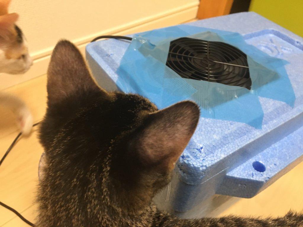 猫用 DIY 自作クーラー