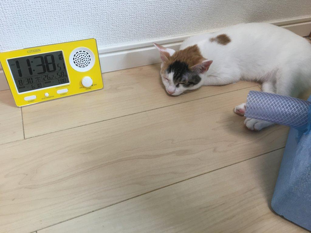 猫用 自作クーラー DIY 保冷剤