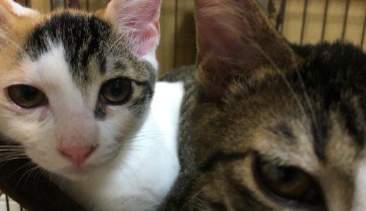 【Twitter】「#猫猫猫夏祭り」ってタグが気になる!発信元を探してみた。