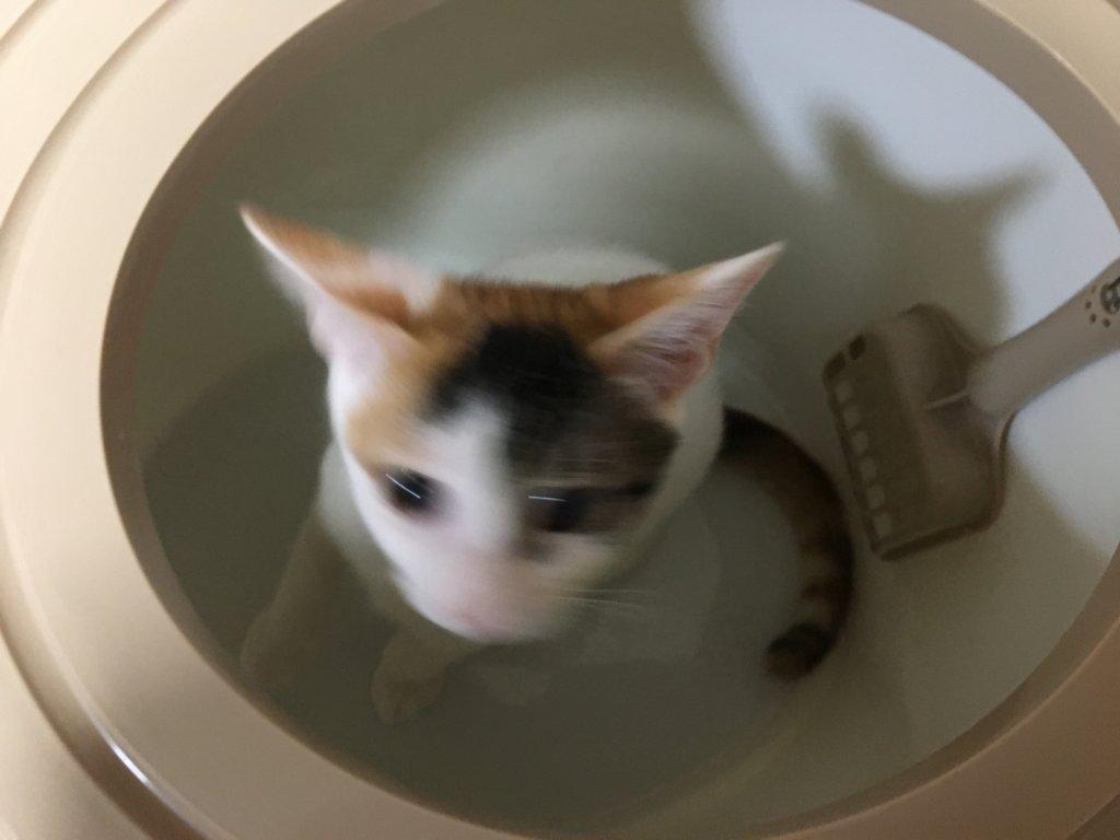 上から猫トイレ あめ
