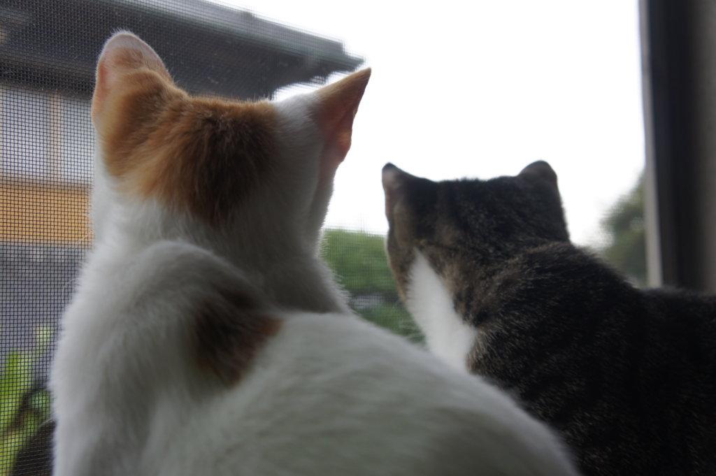 ニャルソック あめ つゆ 猫