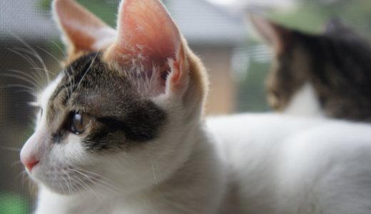 ニャルソックとは?意味を確認したら自宅を警備してくれる猫達を指す猫用語でした。