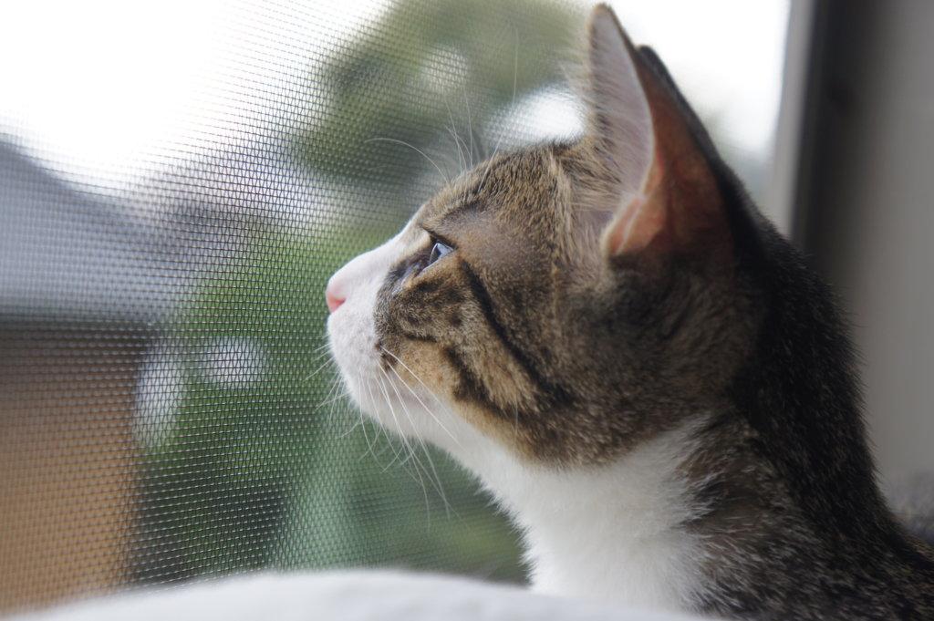 ニャルソック つゆ 猫