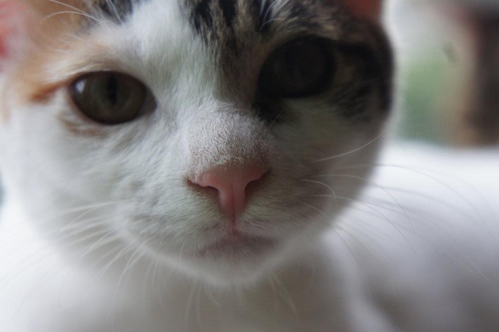 ニャルソック あめ 猫