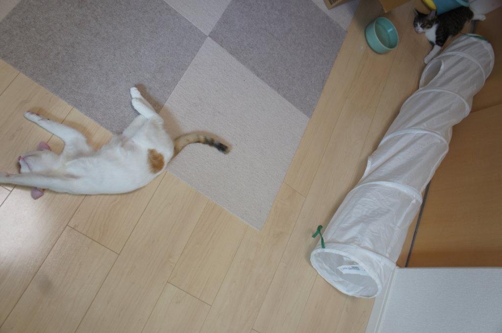 IKEA 猫用 トンネル おもちゃ