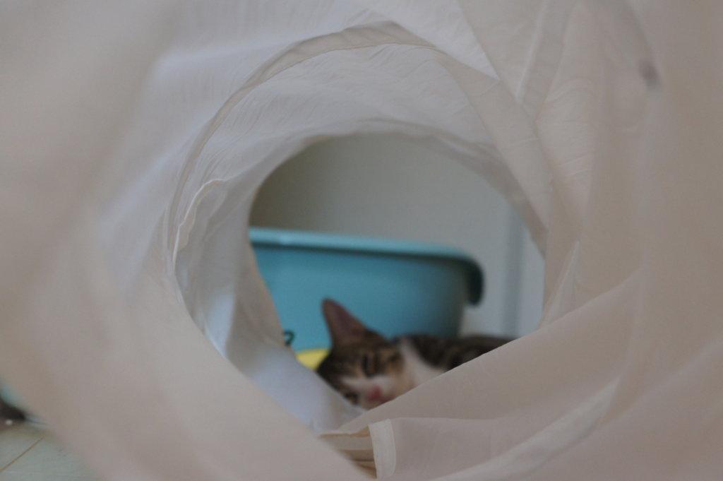 IKEA トンネル 猫用 おもちゃ 寝る