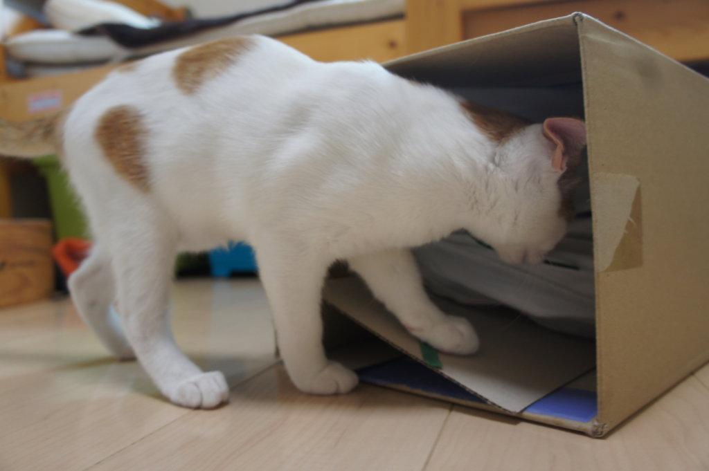 IKEA トンネル 猫用 おもちゃ ダンボール