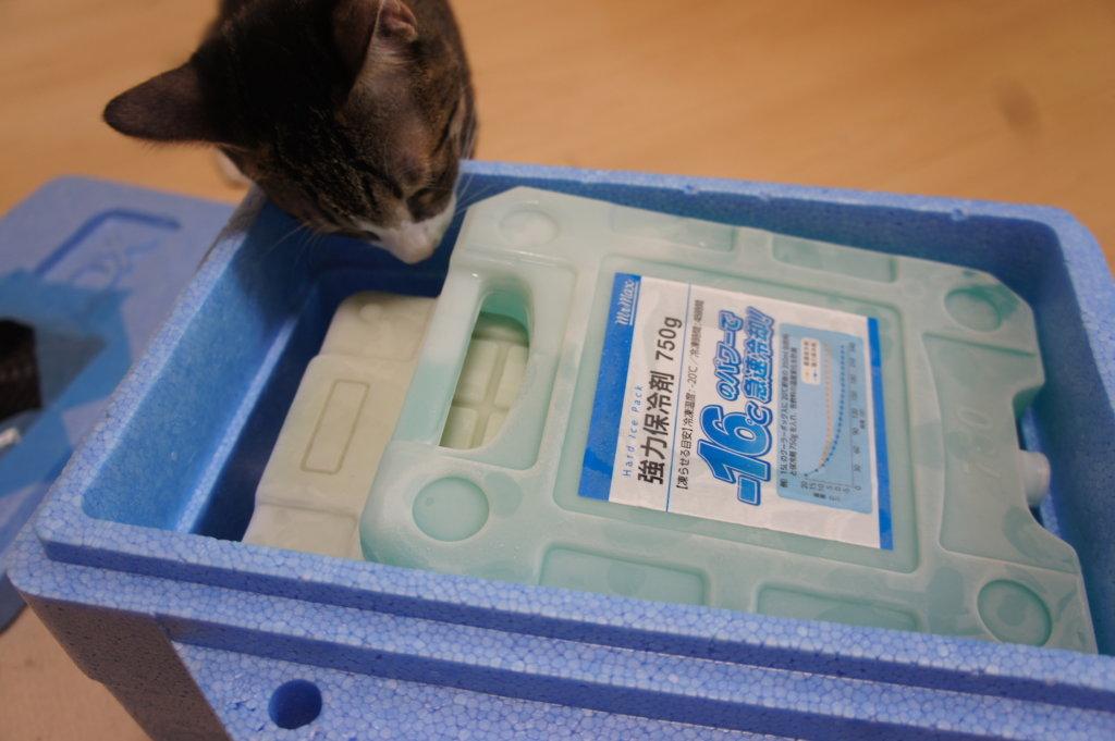 猫用 DIY 自作クーラー 保冷剤