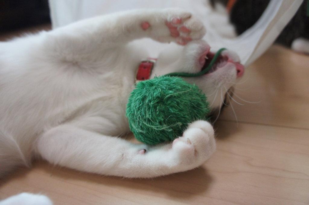 猫 首輪 キジ白 つゆ 三毛猫 あめ