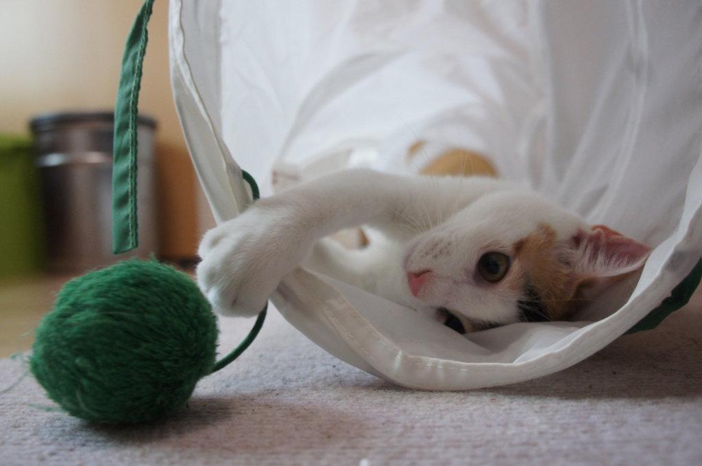 猫 首輪  三毛猫 あめ
