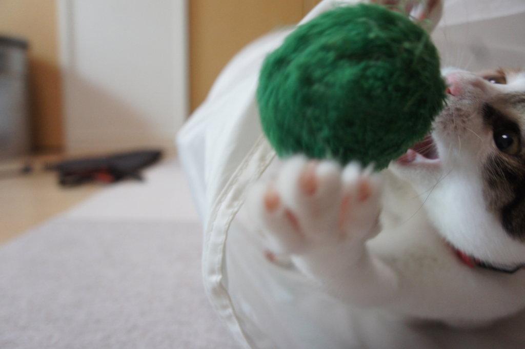 猫 首輪 あめ 三毛猫