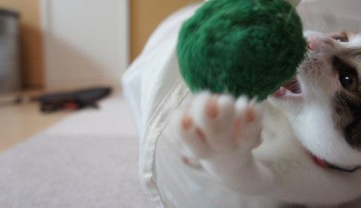 うちの猫、首輪を嫌がって暴れてたんですが、なんとか慣れてくれました!