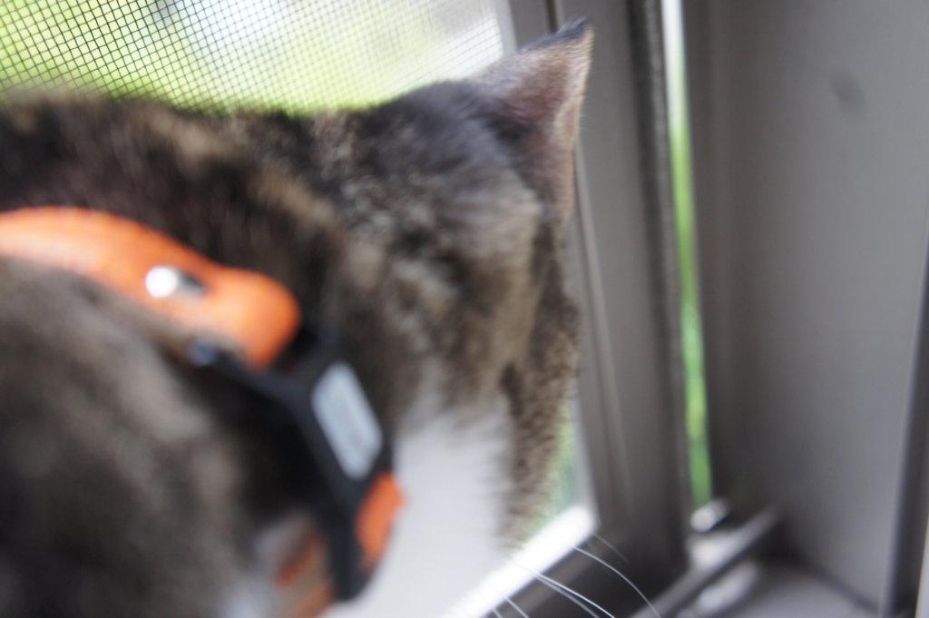 網戸ストッパー ダイソー 猫 脱走防止 対策 つゆ キジ白