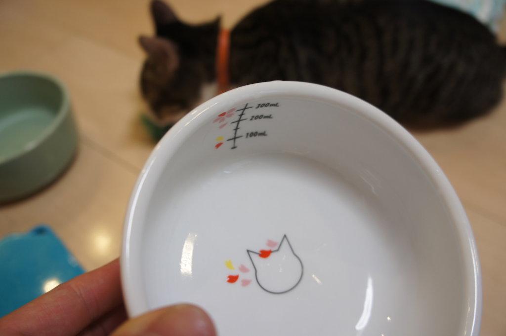 陶器 水飲み皿 猫 猫壱 ウォーターボウル Sakura