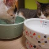 ヘルスウォーターボウル 猫壱 ウォーターボウル 桜 猫 水飲み皿