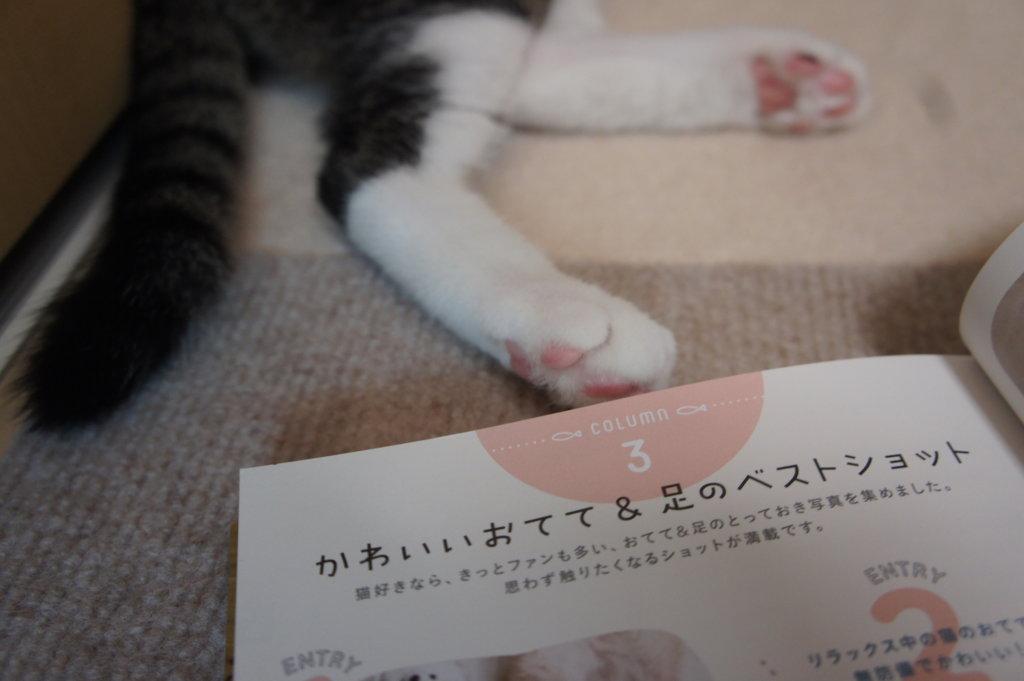 肉球 わたしたちの猫暮らし 本 三毛猫 インスタグラマー ニャンスタグラマー