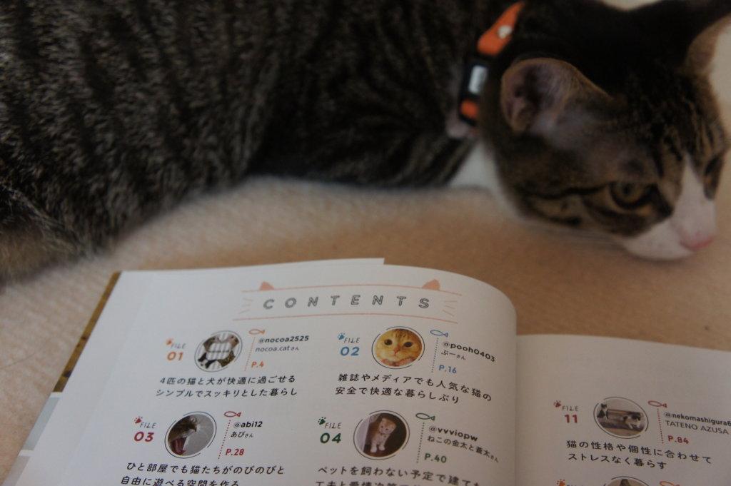 contents 目次 わたしたちの猫暮らし 本 三毛猫 インスタグラマー ニャンスタグラマー