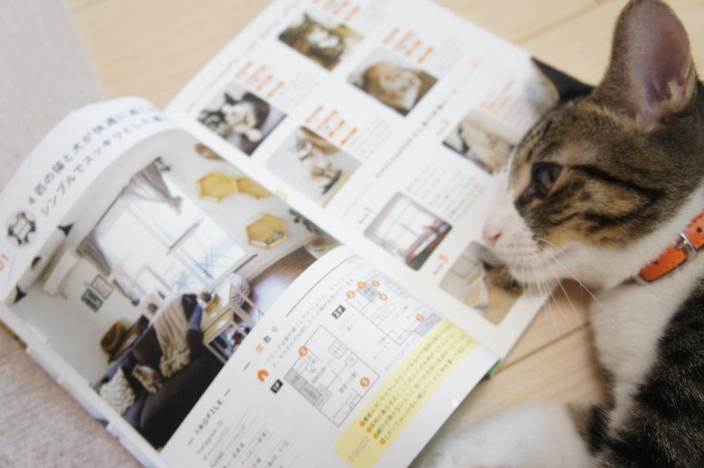 アイテム わたしたちの猫暮らし 本 三毛猫 インスタグラマー ニャンスタグラマー