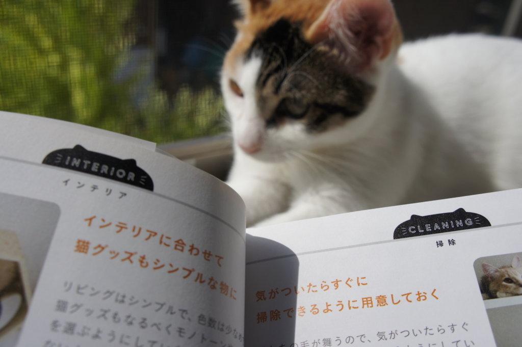 カテゴリ わたしたちの猫暮らし 本 三毛猫 インスタグラマー ニャンスタグラマー