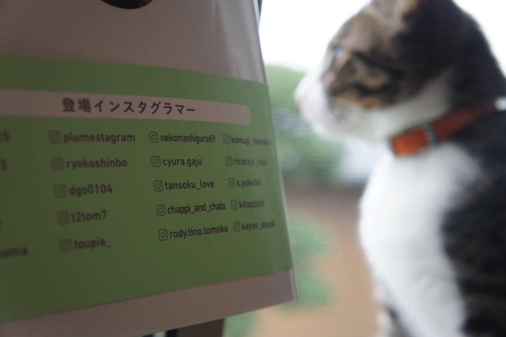 わたしたちの猫暮らし 本 三毛猫 インスタグラマー ニャンスタグラマー