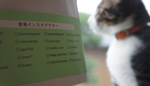 わたしたちの「猫暮らし」に登場インスタグラマーをリストアップ!オススメアイテムもご紹介します!