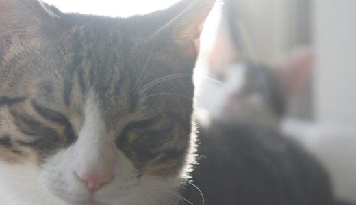 二匹の保護猫と生活を始めて3ヶ月目となりました!この1ヶ月の振り返りです!
