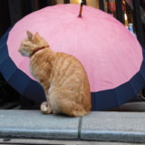 弁財天仲見世通り 猫 傘