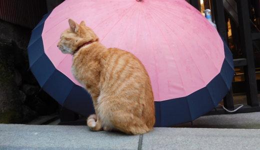 江ノ島って猫島?都心から一番近い猫島と言われる「江ノ島」で観光して来ました!