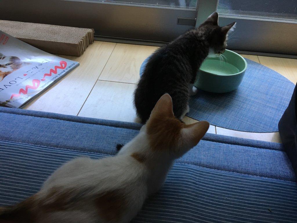 陶器 水飲み皿 猫 ヘルスウォーターボウル