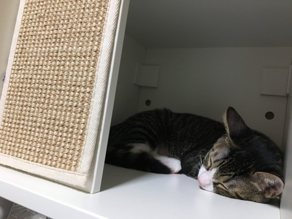 IKEA キャットハウス 猫用