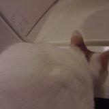 猫 シャンプー 三毛猫 お風呂場
