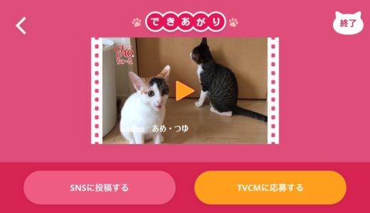 鉄板の猫おやつ「チャオちゅーる」。飼っている猫がCM出演した気になれるアプリ「ちゅーるメーカー」もご紹介!