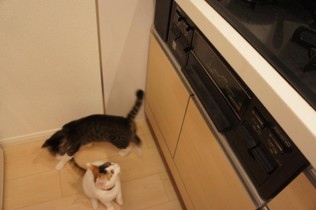 猫 ガスコンロ キジ白 三毛猫 ロック