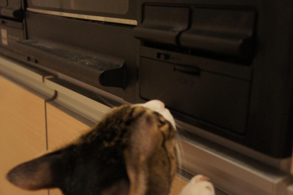 猫 ガスコンロ キジ白  ロック