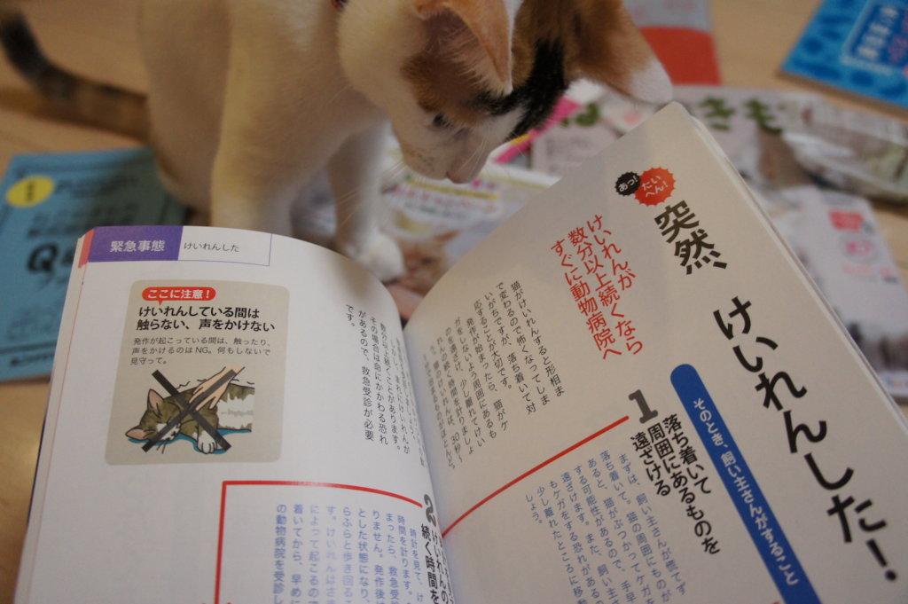ねこのきもち 購読 2018 11月号 愛猫 家庭の医学