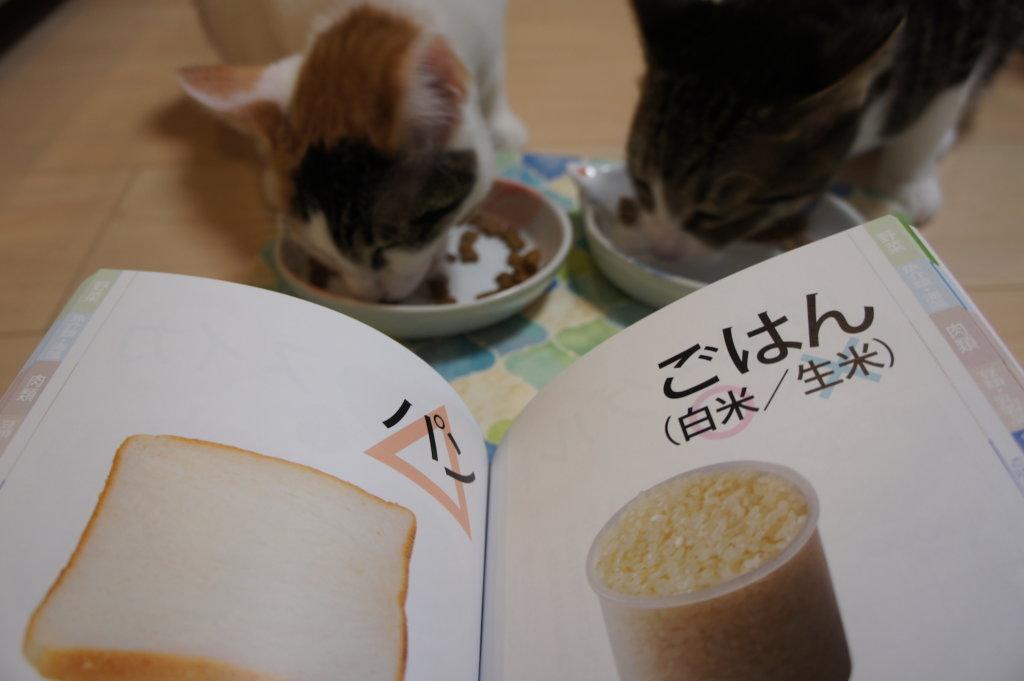 ねこのきもち 購読 2018 11月号 愛猫 食べ物